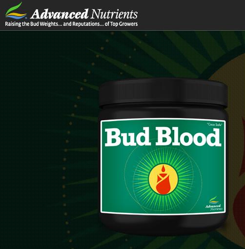 BC Hydroponics Bud Blood